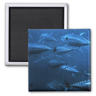 School of Yellowfin Tuna 2 Inch Square Magnet