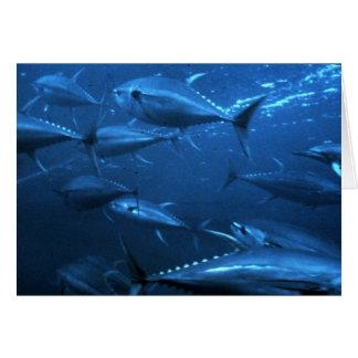 School of Yellowfin Tuna Card