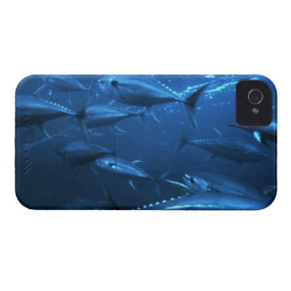 School of Yellowfin Tuna iPhone 4 Cover