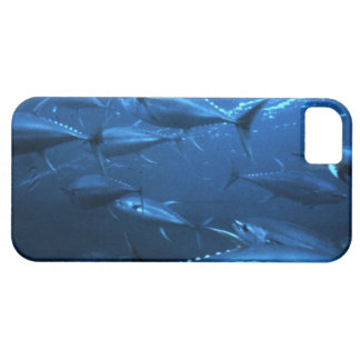 School of Yellowfin Tuna iPhone SE/5/5s Case