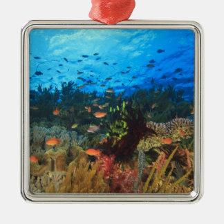 Schooling Anthias fish, Wetar Island, Banda Metal Ornament
