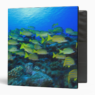 Schooling Bluestripped Snappers Lutjanus 3 Ring Binder
