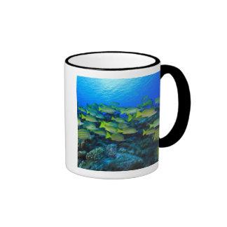 Schooling Bluestripped Snappers Lutjanus Ringer Coffee Mug