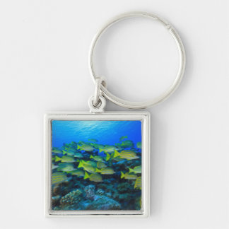 Schooling Bluestripped Snappers Lutjanus Silver-Colored Square Keychain