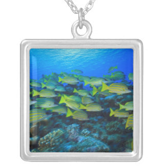 Schooling Bluestripped Snappers Lutjanus Silver Plated Necklace