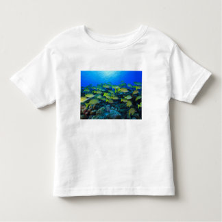 Schooling Bluestripped Snappers Lutjanus Toddler T-shirt