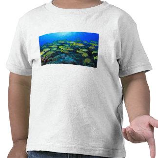 Schooling Bluestripped Snappers Lutjanus T Shirts