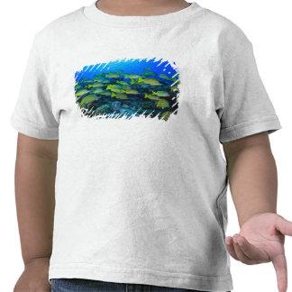 Schooling Bluestripped Snappers Lutjanus Tshirts