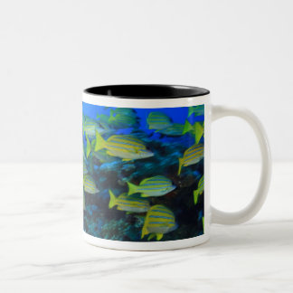 Schooling Bluestripped Snappers Lutjanus Two-Tone Coffee Mug