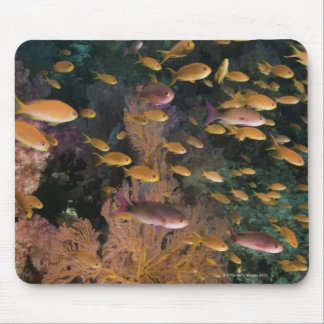 Schooling Fairy Basslets Mouse Pad
