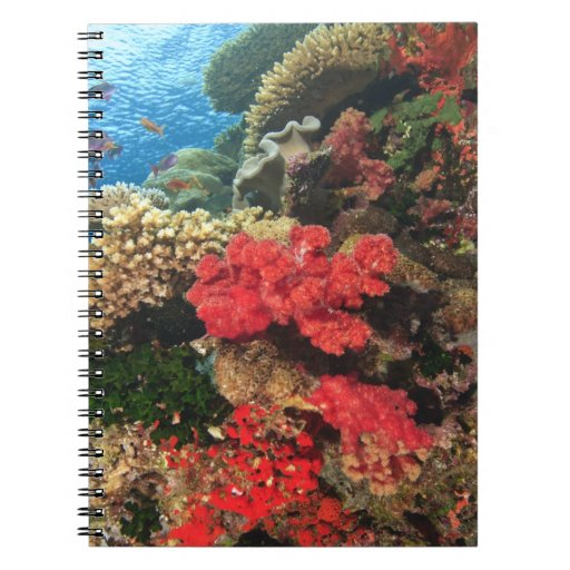 schooling Fairy Basslets  (Pseudanthias 2 Spiral Note Book