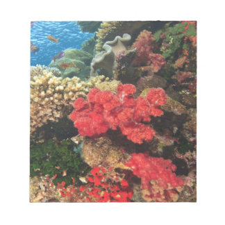 schooling Fairy Basslets  (Pseudanthias 2 Notepad