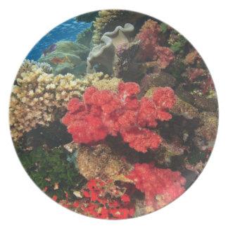 schooling Fairy Basslets  (Pseudanthias 2 Plates