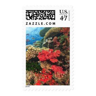 schooling Fairy Basslets  (Pseudanthias 2 Postage Stamp