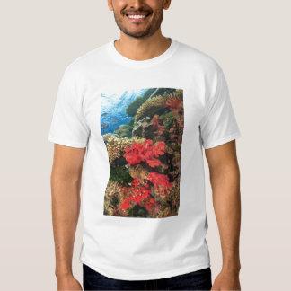 schooling Fairy Basslets  (Pseudanthias 2 T Shirt