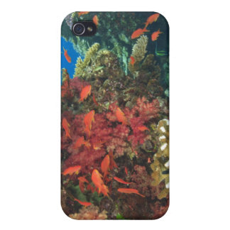 schooling Fairy Basslets (Pseudanthias 3 iPhone 4/4S Cover