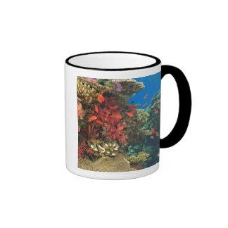 schooling Fairy Basslets  (Pseudanthias 3 Ringer Coffee Mug