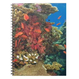 schooling Fairy Basslets  (Pseudanthias 3 Spiral Notebook