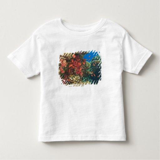 schooling Fairy Basslets  (Pseudanthias 3 Toddler T-shirt