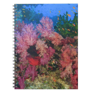 schooling Fairy Basslets  (Pseudanthias 4 Notebook