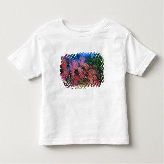schooling Fairy Basslets  (Pseudanthias 4 Tee Shirt