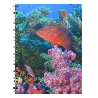 schooling Fairy Basslets  (Pseudanthias Notebook