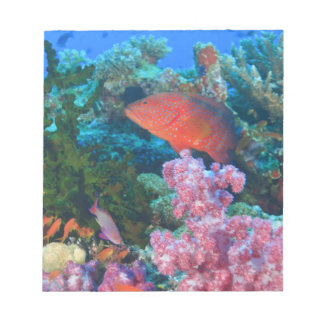 schooling Fairy Basslets  (Pseudanthias Notepad