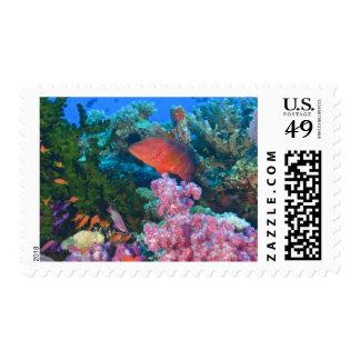 schooling Fairy Basslets  (Pseudanthias Postage Stamp