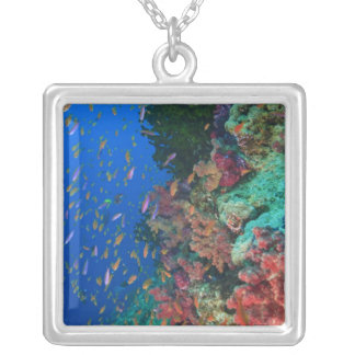 Schooling Fairy Basslets (Pseudanthias Silver Plated Necklace