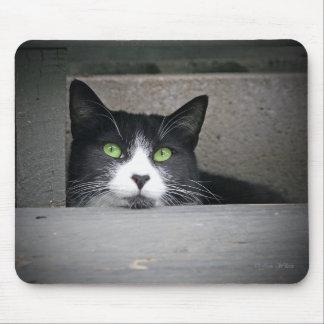 Schubert el gato, gatito Mousepad del gatito Tapete De Ratones