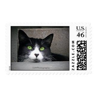 Schubert Postage Stamp