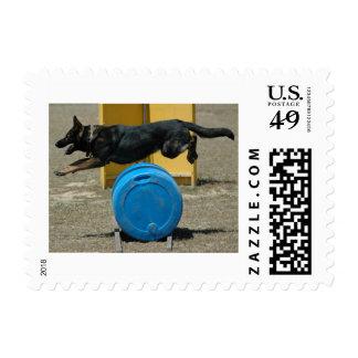 Schutzhund Stamp - Cali