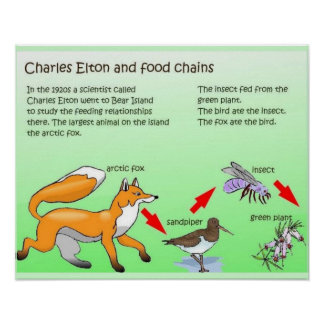 Science, Charles Elton and food chains Poster