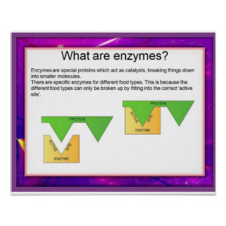 Science, Digestion, Enzymes at work Poster