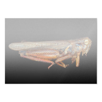 Science - Entomology - The specimin Card