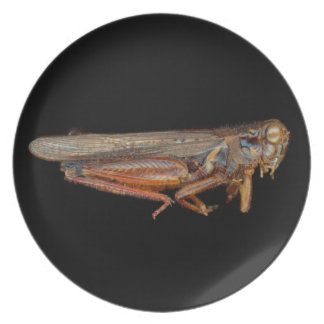 Science - Entomology - The specimin Plate