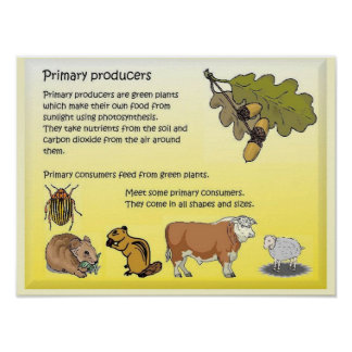 Science, Food and Nutrition, Primary producers Poster