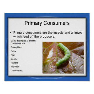 Science, Food chain; Primary Consumers Poster
