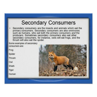 Science,Food chain, secondary Consumers Poster
