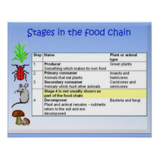 Science, Food chain stages Poster