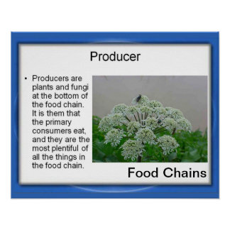 Science, Food chains, Producers Posters