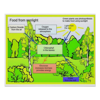 Science, Food, Food from sunlight Poster