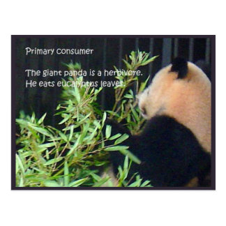 Science, Food sources, Primary consumers Postcard