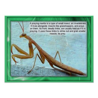 Science, Insects, Preying Mantis Poster