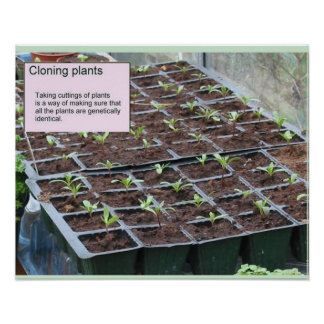 Science, life science, Cloning plants Poster