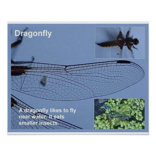 Science, Life science, dragonfly Posters