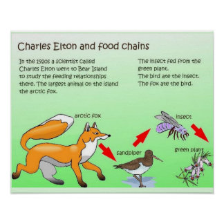 Science, Life science, Food Chains Print