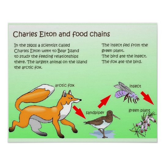 Science, Life science, Food Chains Poster