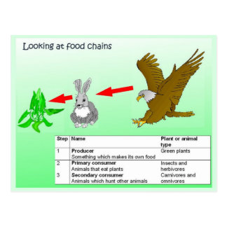 Science, Looking at food chains Postcard