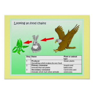 Science, Looking at food chains Poster